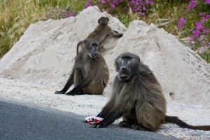 20101102_SouthAfrica_090