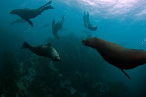 Verspielte Seehunde